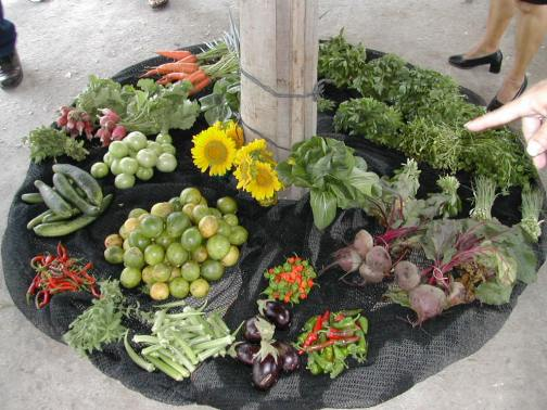 Produce_and_flowers_from_a_Cuban_organopónico